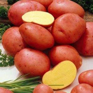 Характеристика и описание сорта картофеля манифест. пошаговая инструкция по выращиванию