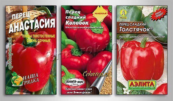 Описание и выращивание сорта перца толстячок