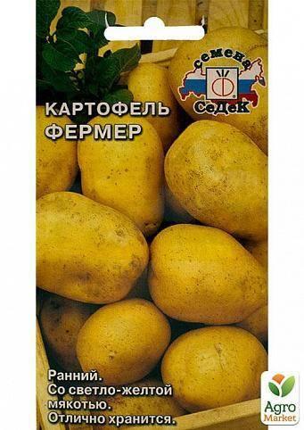 Сорт картофеля – санте: описание, качества, посадка и уход