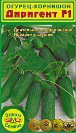 Голландский гибридный огурец «седрик», рекомендованный для выращивания в тепличных условиях