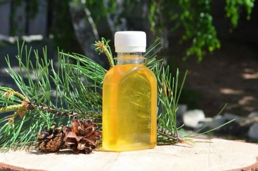 Польза и вред сосновой живицы для организма. применение масла и мази в домашних условиях