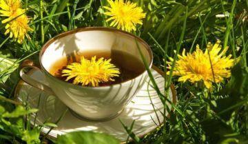 Настойка одуванчика — рецепты, от каких болезней, применение