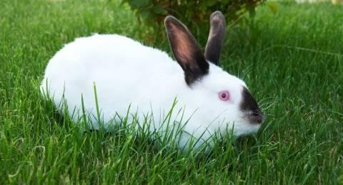 Каких кроликов лучше разводить