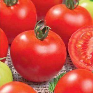 Описание сорта помидоров «красная шапочка»