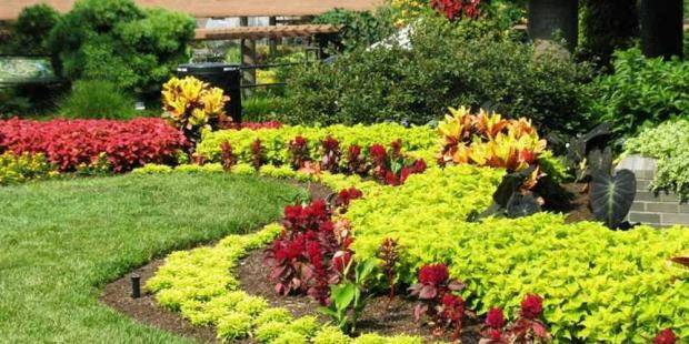 Клумбы из многолетников (98 фото): красивые цветники своими руками на даче, схемы посадки растений непрерывного цветения