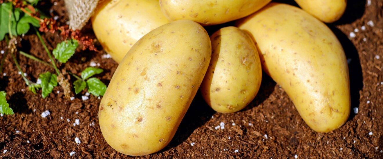 Обработка картофеля перед посадкой для защиты и повышения урожая