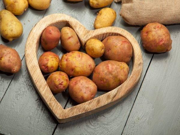 О картофеле молли: описание семенного сорта, характеристики, агротехника
