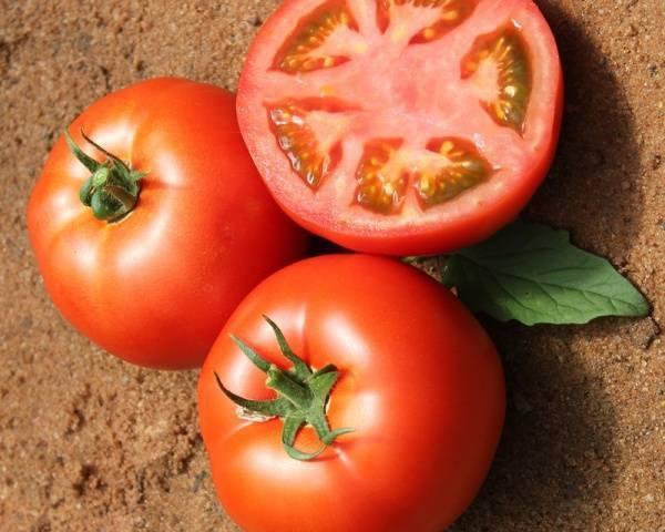 """Томат """"президент"""" f1: описание и характеристики сорта, рекомендации по уходу и выращиванию, урожайность, высота куста и фото плодов-помидоров"""