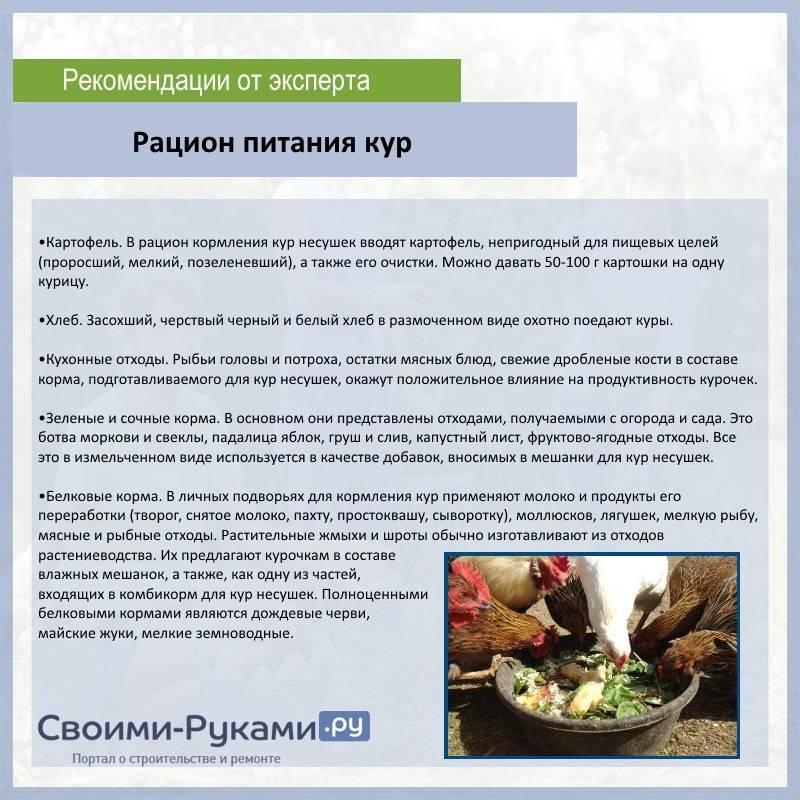 Комбикорм для свиней: виды, приготовление своими руками, особенности кормления