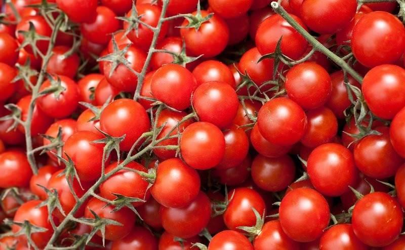 Самые лучшие сорта томатов черри для теплиц