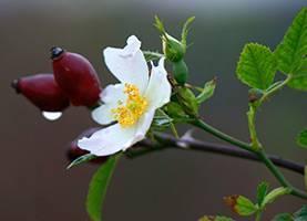 Лечебные свойства подсолнуха и для чего применяются его корни?