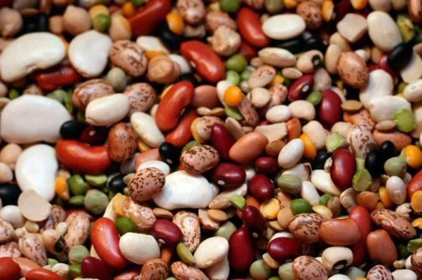 Фасоль лимская: фото, полезные свойства, выращивание и уход