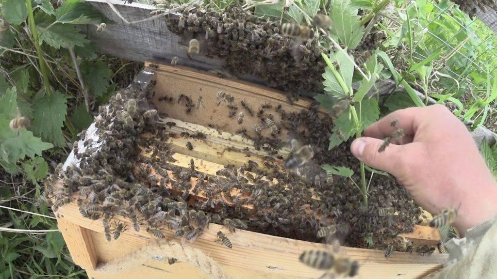 Лекарства для пчёл: список препаратов от болезней и вредителей, при роении, для дезинфекции