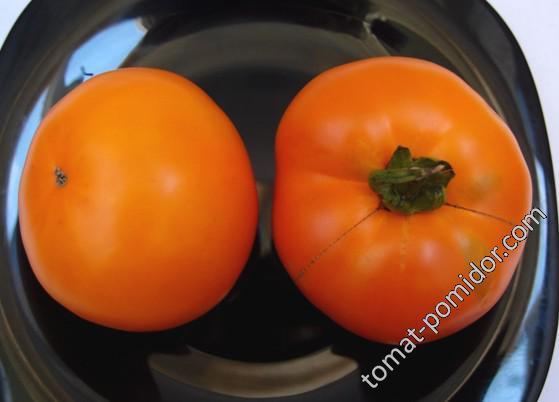 Выращивание томата оранжевый слон