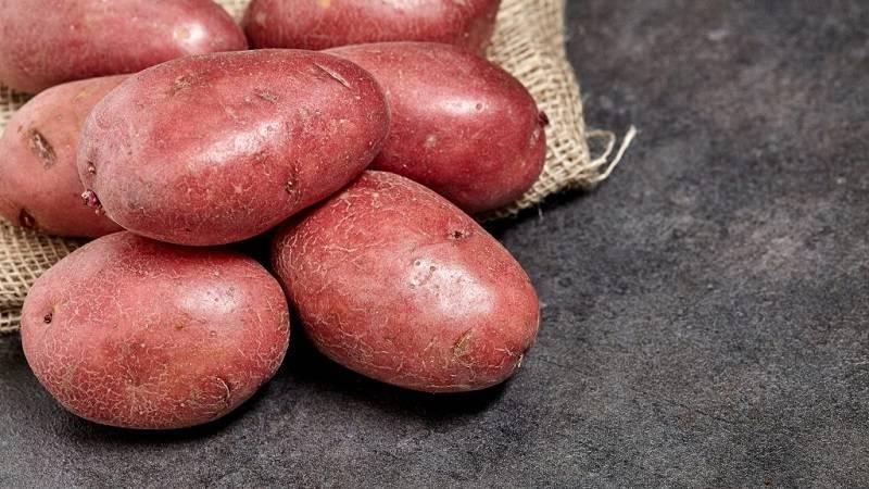 Картофель чароит — описание сорта, фото, отзывы, посадка и уход