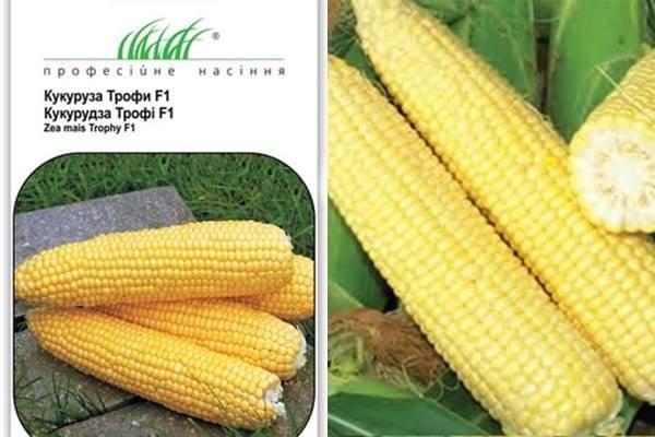 Сорта кукурузы