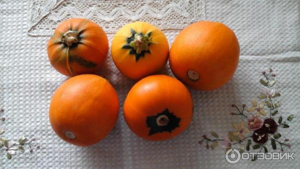 Кабачок апельсинка рецепты салатов