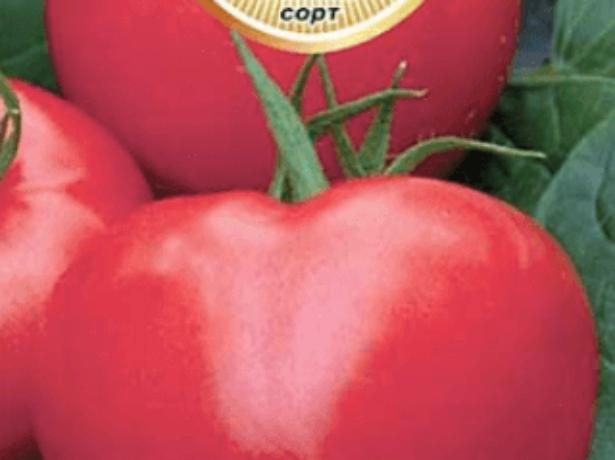 """Томат """"фатима"""" : описание сорта помидор, его основные характеристики и фото, а также особенности выращивания"""
