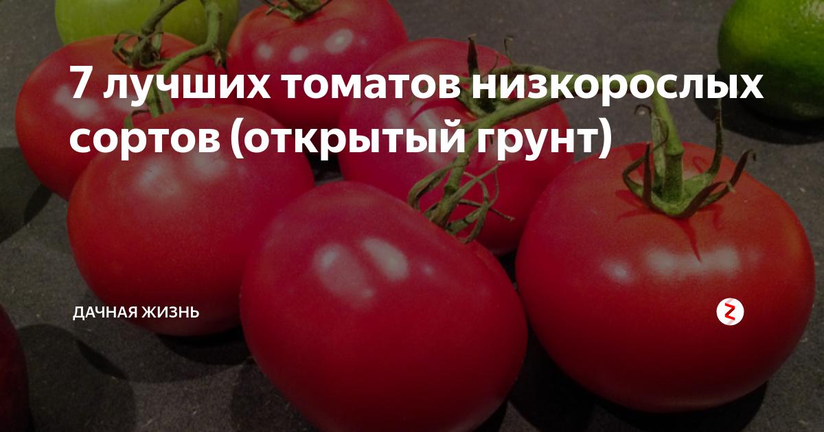 Низкорослые томаты