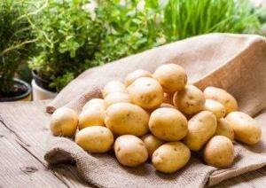Княжеский сорт картофеля «рогнеда» : описание сорта, характеристика, фото