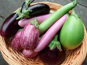 Выращивание баклажанов в сибири – лучшие сорта и правила выращивания
