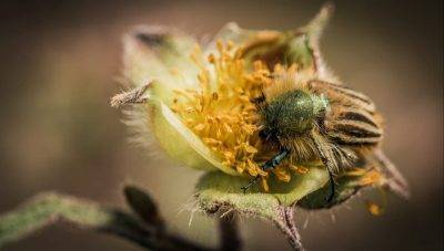 Роль пчел в опылении и сборе нектара разных видов растений