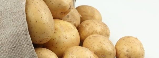 Картофель зекура: 8 особенностей и 9 советов по выращиванию