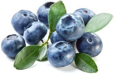 Голубика — лечебные свойства, применение и рецепты