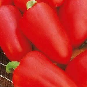"""Описание и характеристика перца сорта """"ласточка"""". агротехника выращивания, болезни и вредители культуры"""