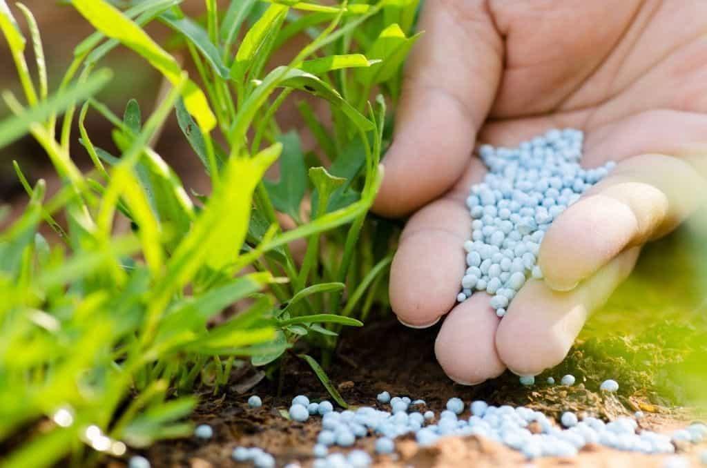 Калимагнезия: применение удобрения на огороде и в саду, правила внесения осенью, весной и летом
