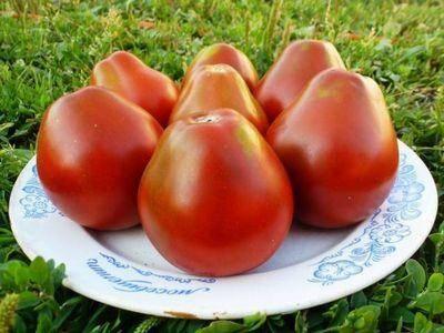 """Томат """"груша красная"""": описание сорта, фото, особенности выращивания отличного урожая помидор"""