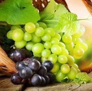 Правила, способы и сроки осенней пересадки винограда