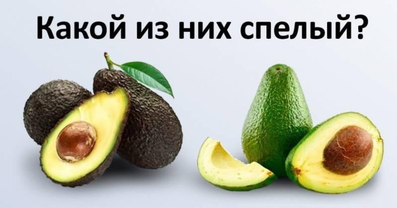 Как правильно выбрать авокадо, хранить и приготовить