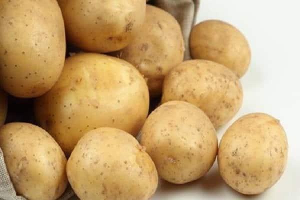 Картофель зорачка: описание и характеристика сорта, агротехника посадки и ухода