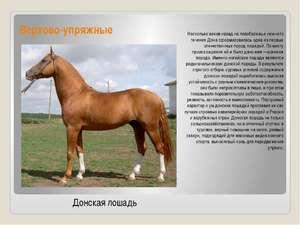 Характеристики арабской лошади