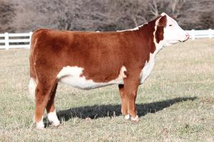Список оригинальных и забавных кличек коров