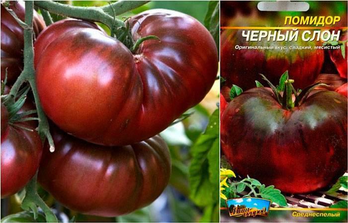 """Томат """"розовый слон"""": описание сорта, характеристика, особенности выращивания и фото помидоров"""