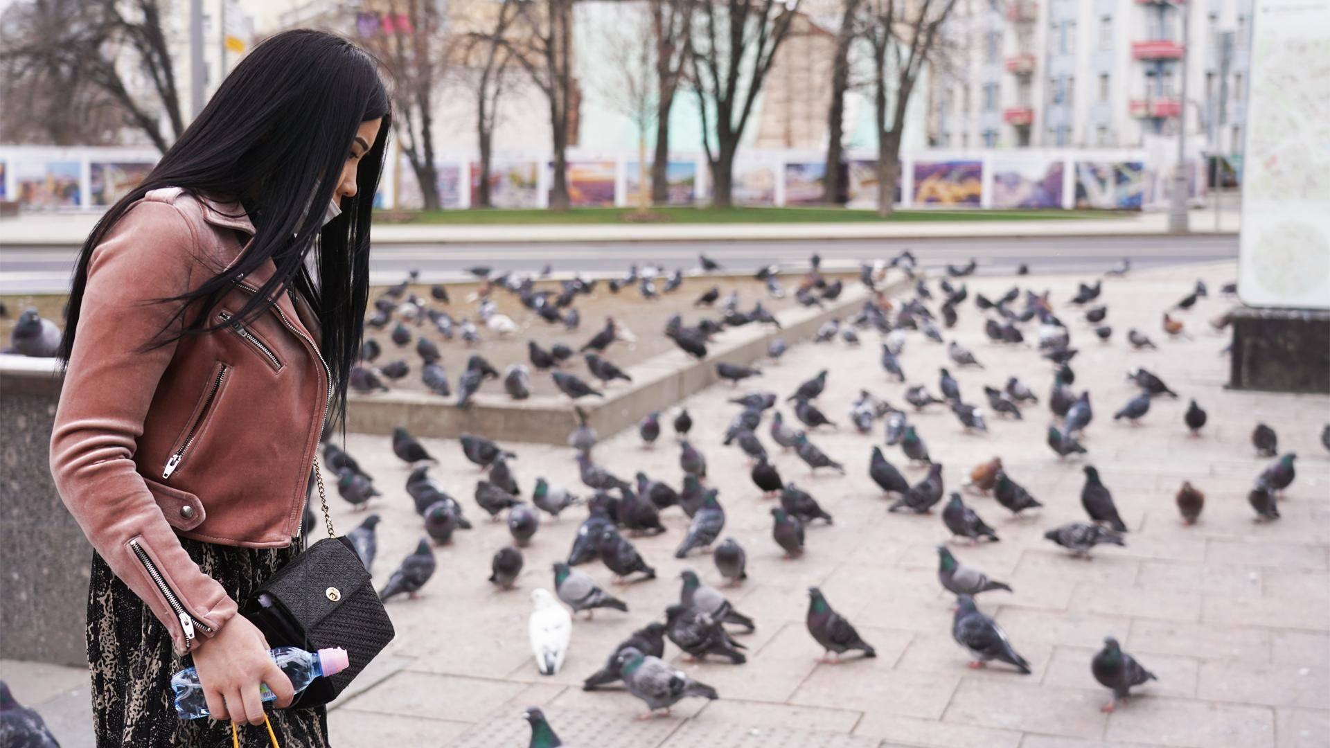 Какой болезнью может заразить голубь