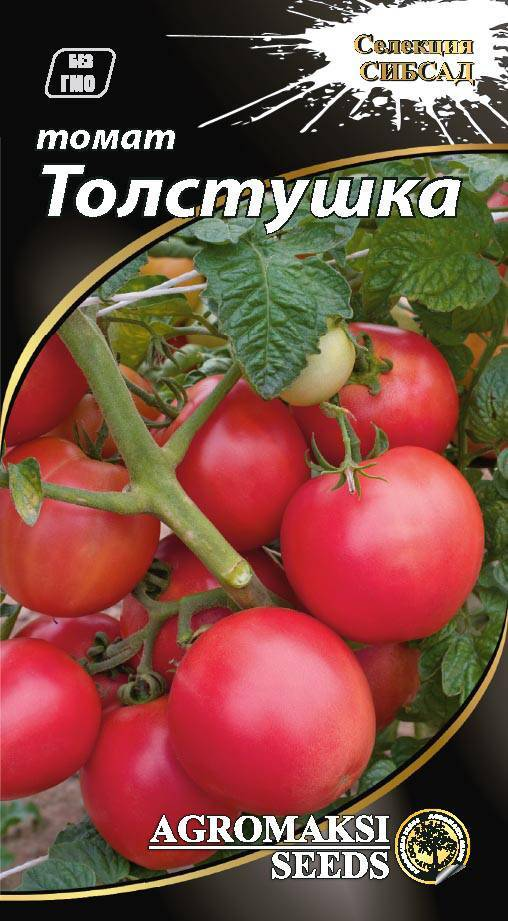 Сорт помидор толстой: описание и особенности выращивания