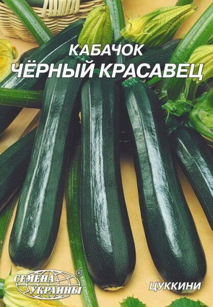 Кабачок-цуккини «черный красавец»: характеристика сорта и секреты выращивания