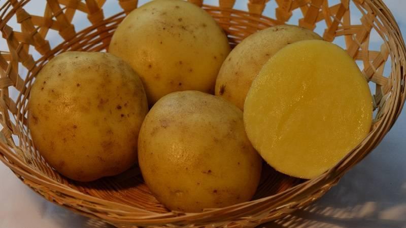 Характеристика сорта картофеля импала, описание и фото сорта