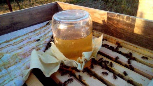 Что такое нозематоз у пчёл и как его лечить?