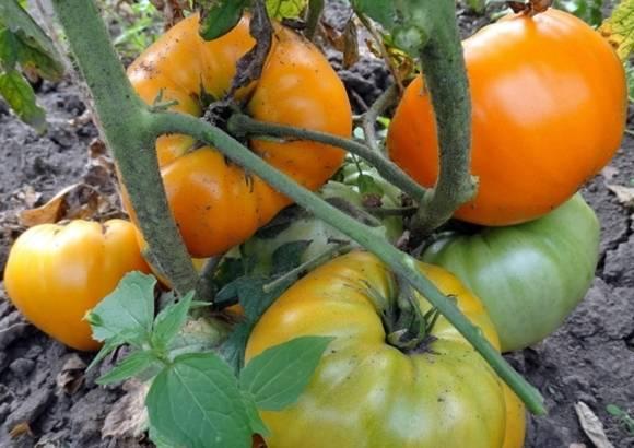 Томат оранжевая клубника: характеристика и описание сорта, отзывы