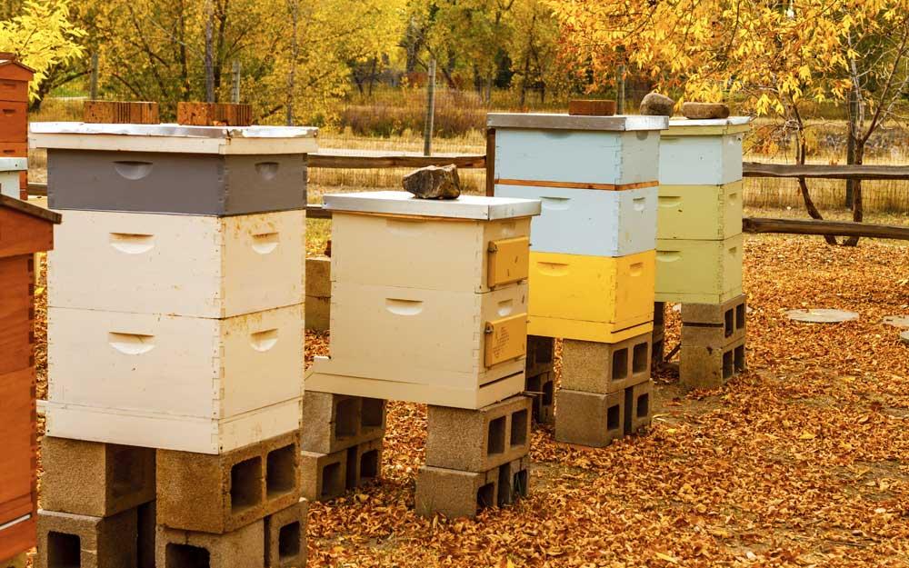 Основные правила подготовки пчел к зимовке