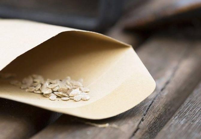 Как и зачем готовить семена к посеву