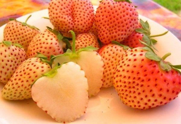 Клубника пайнберри: описание, выращивание, отзывы