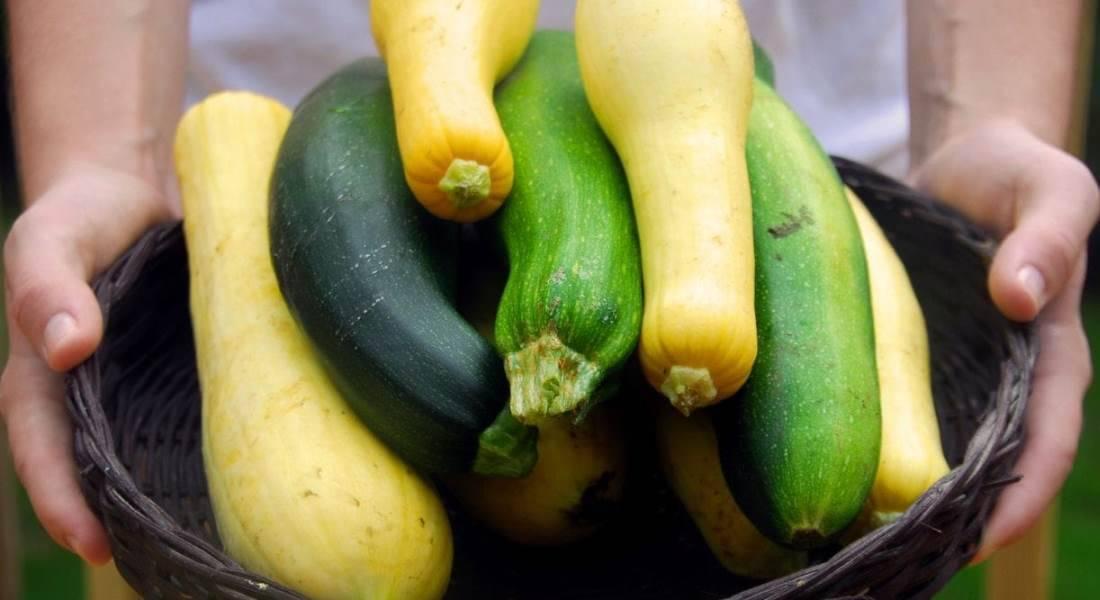 Кабачок желтый: 10 популярных сортов
