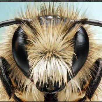 Апимакс для пчел: инструкция и отзывы по применению