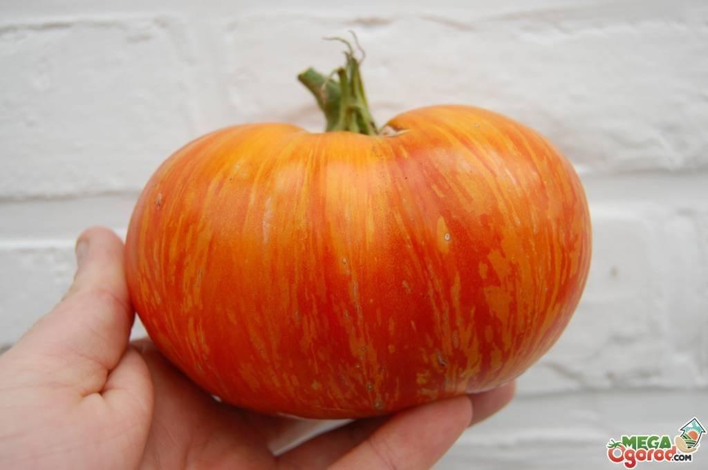 Томат «король рынка»: характеристика и особенности выращивания сорта