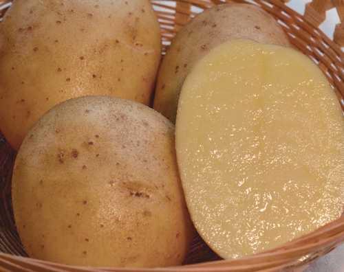 Сорт картофеля Вега: характеристика, отзывы